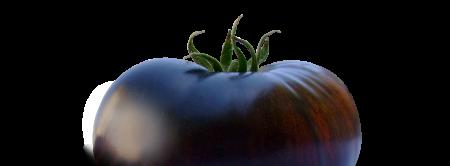 black-pomo