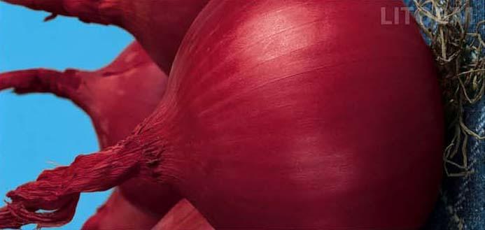 Cipolla ramata rossa di Milano