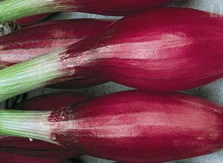 Cipolla rossa lunga