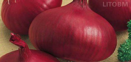 cipolla-savonese-rossa
