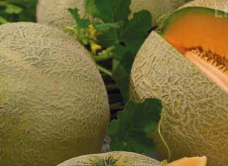 Melone retato bingo