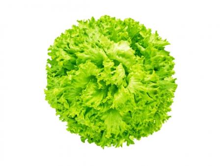 Lattuga Lollo verde l'Ortofruttifero