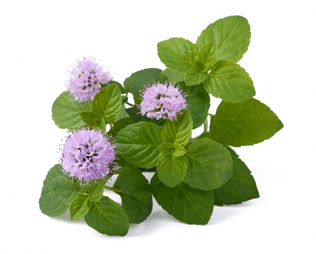 Mint with flowers
