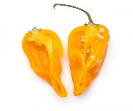 Peperoncino Fatalii yellow l'Ortofruttifero