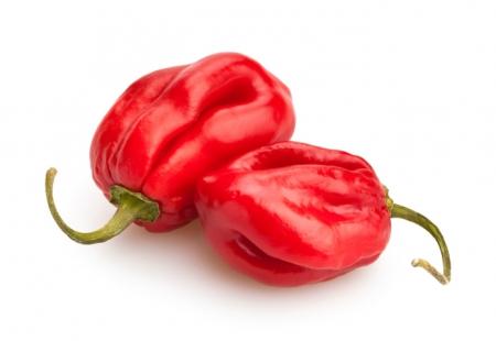 Peperoncino Red Savina l'Ortofruttifero