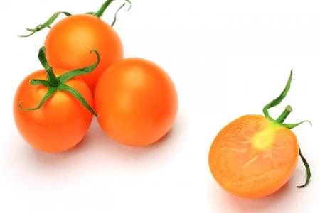 Pomodoro Ciliegia arancione l'Ortofruttifero