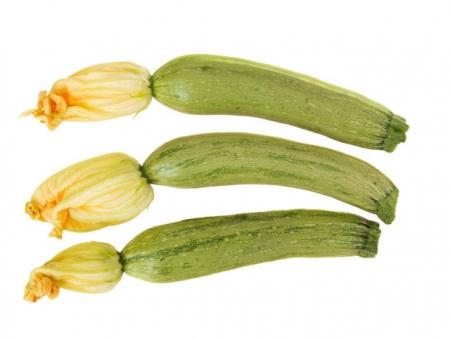 Zucchino Alberello di Sarzana l'Ortofruttifero