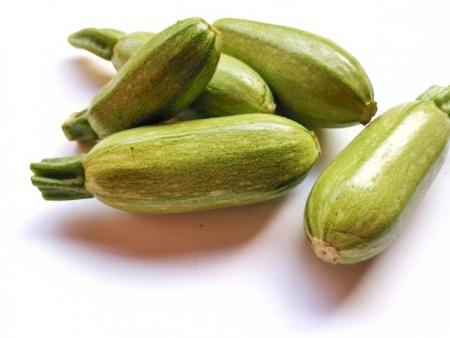 Zucchino Bolognese l'Ortofruttifero