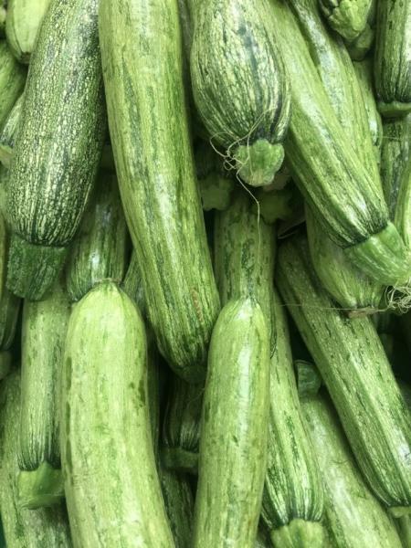 Zucchino Scudo l'Ortofruttifero