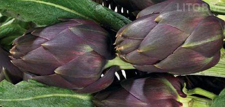 carciofo-violetto-terom