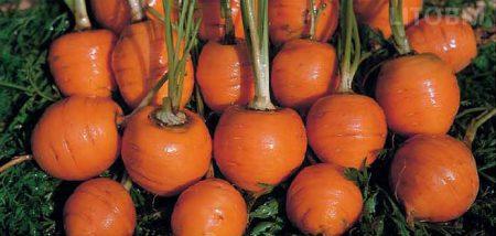 carota-tonda-paris-market