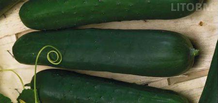 cetriolo-lungo-marketmore