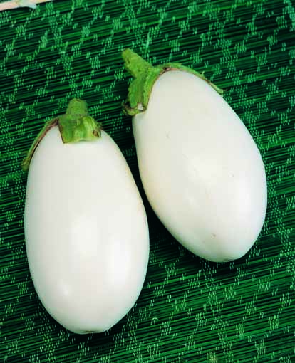Melanzana bianca sel clara l 39 ortofruttifero for Melanzane innestate