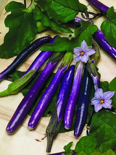 Melanzana kareena lunga violetta fine l 39 ortofruttifero for Melanzane innestate