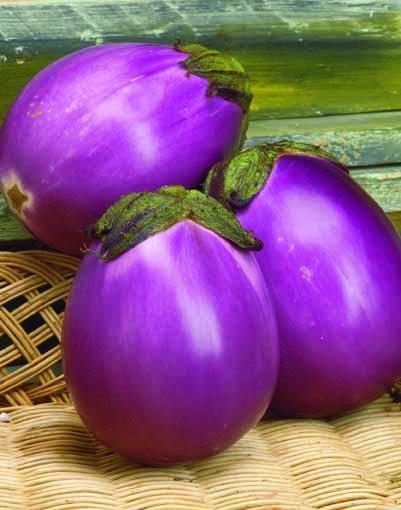 Melanzana tonda violetta beatrice l 39 ortofruttifero for Melanzane innestate