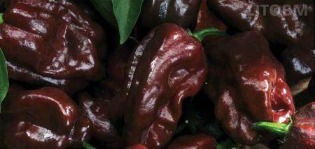 peperoncino-habanero-chocolate