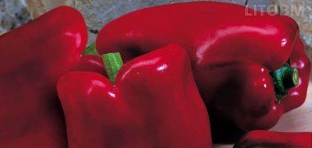 peperone-quadrato-allungato-rosso-belrubi
