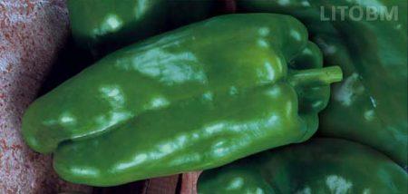 peperone-quadrato-allungato-verde-macio