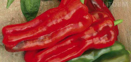 peperone-quadrato-rosso-red-imperator