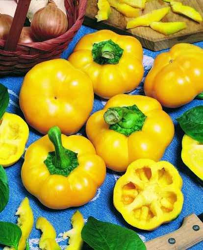 peperone-topepo-giallo