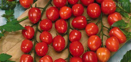 pomodoro-a-fragola-tomatoberry