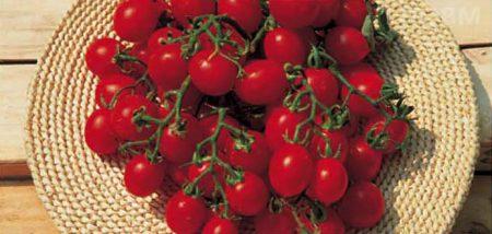 pomodoro-ciliegino-strombolino-determinato