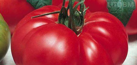 pomodoro-degheio-marmande
