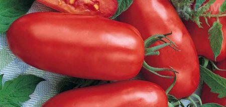 pomodoro-lungo-smarzano-cirano