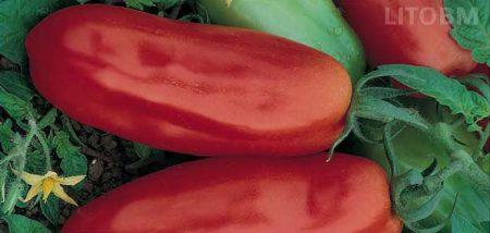 pomodoro-lungo-smarzano-indeterminato
