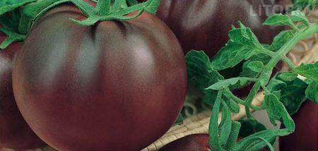 pomodoro-nero-tondo-di-crimea
