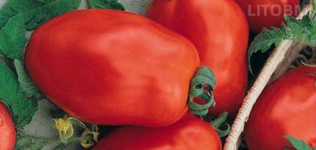 pomodoro-ovale-riglio