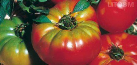 pomodoro-pantano-tondo
