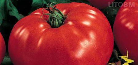 pomodoro-patata