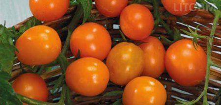 pomodoro-ponderosa-giallo