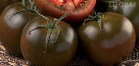 pomodoro-sardo-kreos