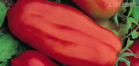 pomodoro-scatolone-ind