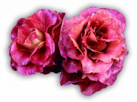 radicchio-rosa-isontina