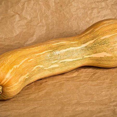 Zucche zucchine cetrioli piantine l 39 ortofruttifero for Cetriolo tondo