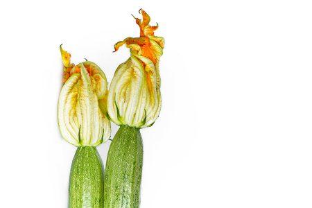 zucchino-alberello-sarzana