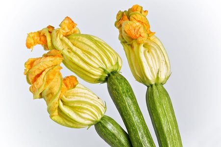 zucchino-altea