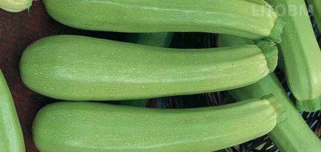 zucchino-chiaro-ipanema