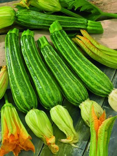 zucchino-portofino