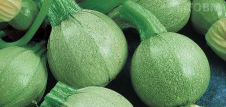 zucchino-tondo-geode