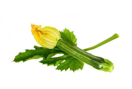 Zucchino Fiorentino l'Ortofruttifero