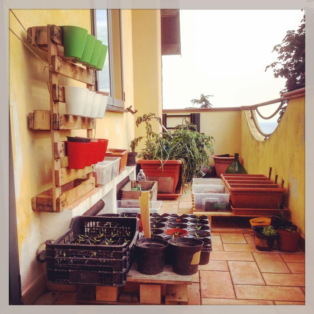 Come Coltivare Pomodori Sul Balcone orto invernale sul balcone • l'ortofruttifero
