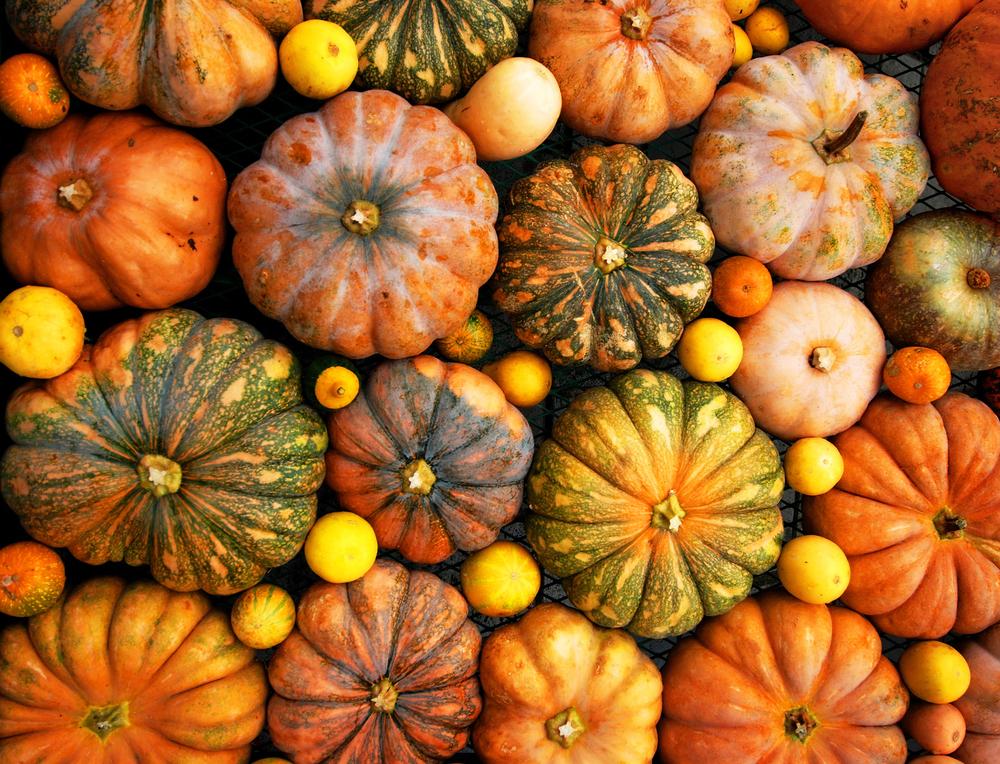 Zucca Di Halloween Quando Seminare.Scopri Quando Si Raccolgono Le Zucche E Come Conservarle
