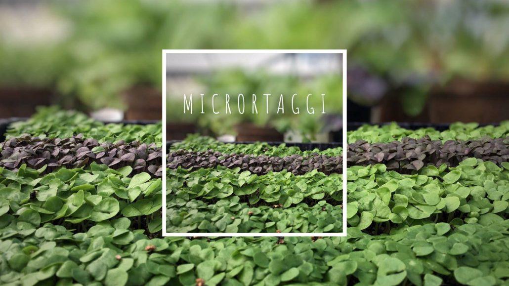 MicrOrtaggi Micro Ortaggi