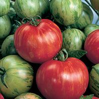 pomodoro STRISCE CHERRY pomodori di varieta antiche