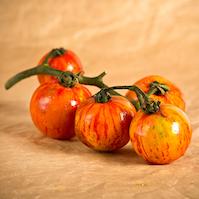 pomodoro vigna rossa pomodori di varieta antiche