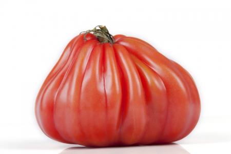 Pomodoro cuore di bue di Albenga
